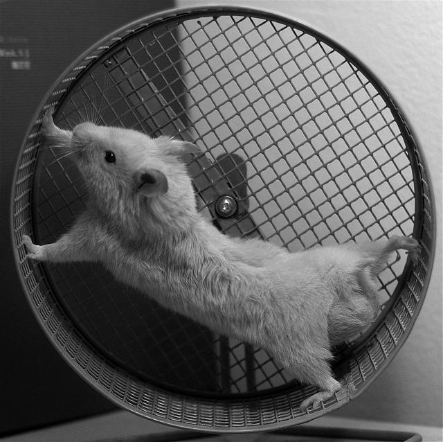 hamster_in_wheel